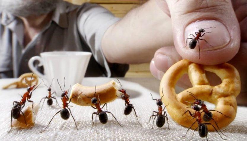 come tenere lontano le formiche